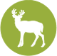 Primary Icon of a White-Tailed Deer